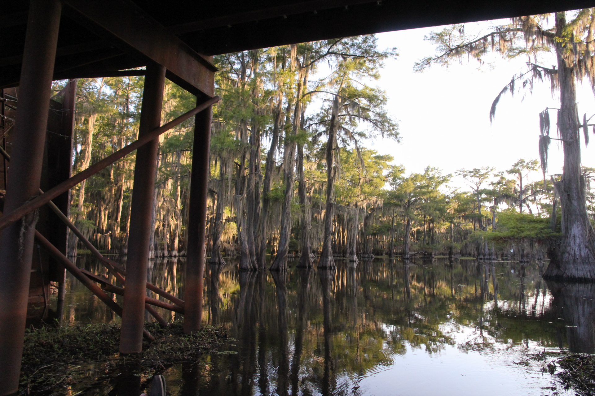 caddo lake-105